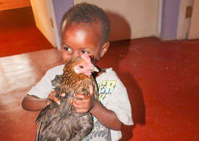 agnes chicken